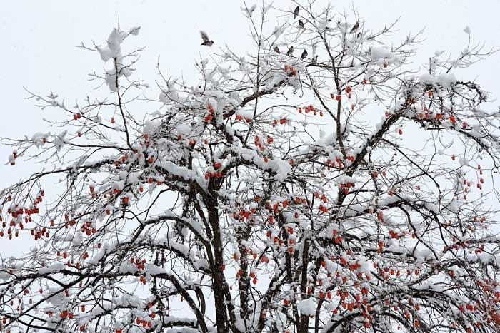 東大寺 雪景色1