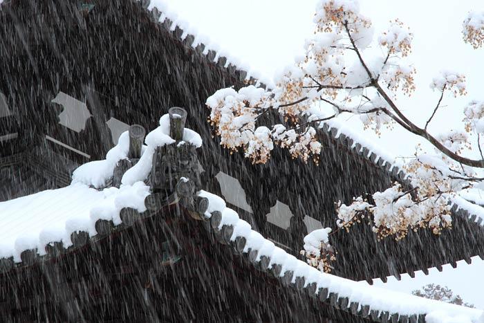 東大寺 雪景色2
