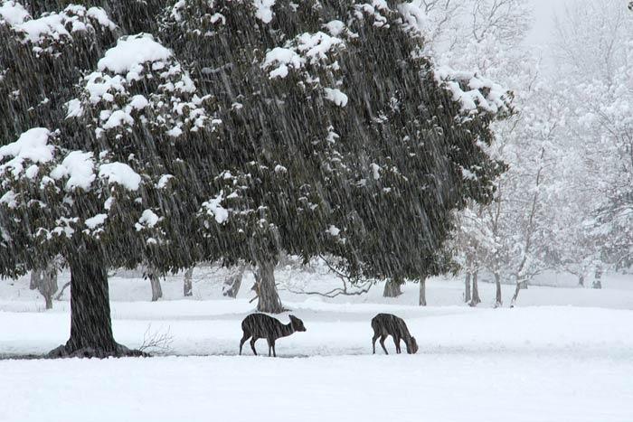 東大寺 雪景色4