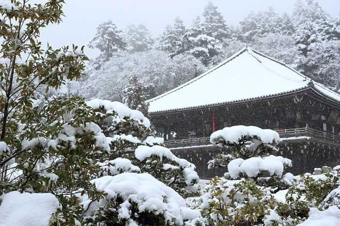 東大寺 雪景色5