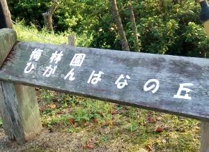 みろく公園彼岸花の丘