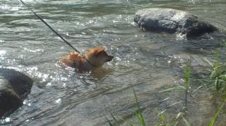 swimming mame