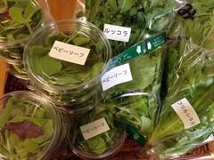 水耕野菜2