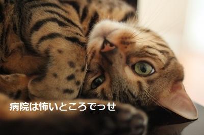 s-IMG_0440.jpg
