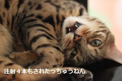 s-IMG_0445_20120825213303.jpg