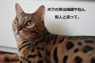 s-IMG_0454.jpg