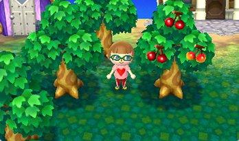 フルーツ収穫