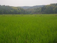 [写真]農園の周りの田んぼ風景