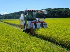 [写真]コンバインで稲を刈っているところ