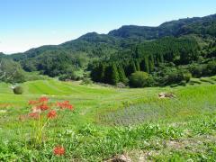 大山千枚田の風景