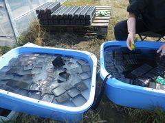 [写真]苗のポットを洗浄しているところ