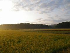 [写真]朝陽があたる三舟山
