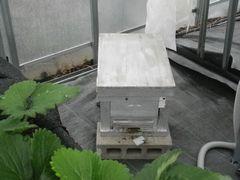 [写真]ミツバチ達の巣箱