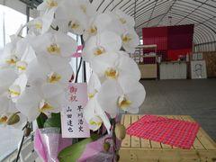 [写真]開園祝いにいただいた胡蝶蘭