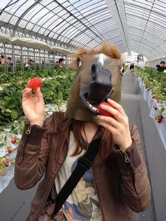 [写真]お馬さんがイチゴを食べようとしているところ