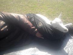 [写真]子ヤギ・アランが農園主の足を枕にしてお昼寝をしている様子