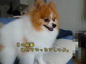 YQ4Z_mmm.jpg