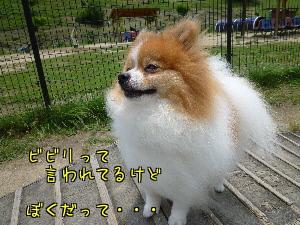 tgjLx1RtkpGQ_Xo.jpg