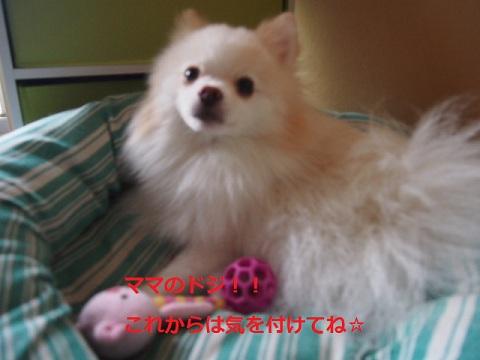 P9014601.jpg