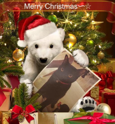 めりークリスマス、ポメチャ
