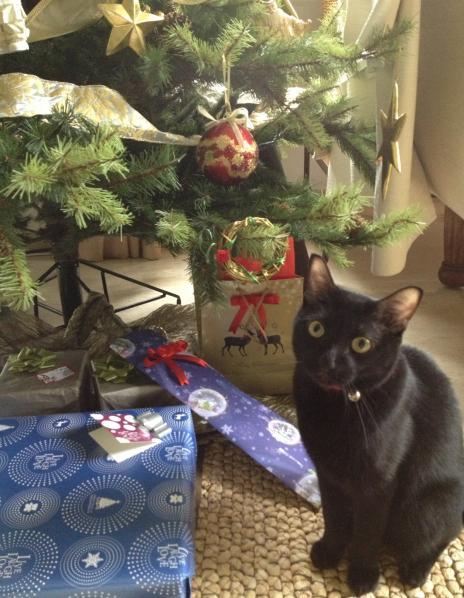 ポメチャとクリスマスギフト