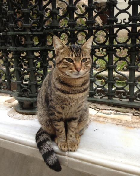 モスクの猫