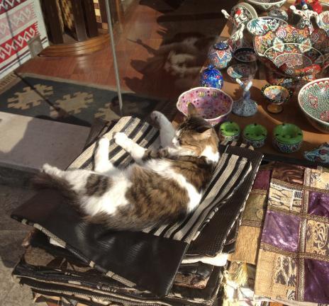 土産物屋の猫