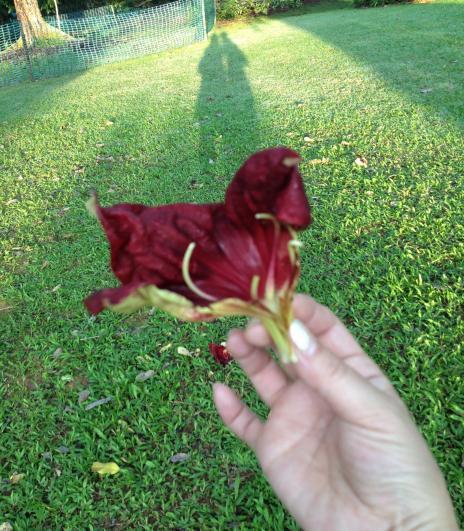 ソーセージの花