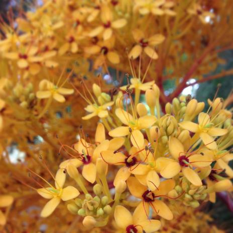 仏陀の花、アップ