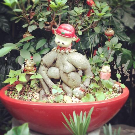 不思議な盆栽