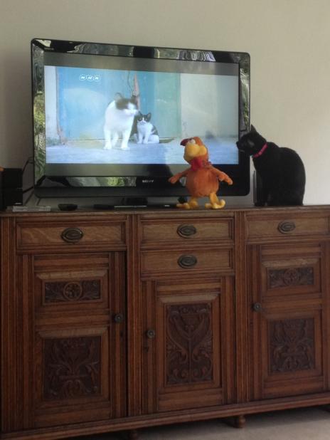 テレビを見上げるポメチャ