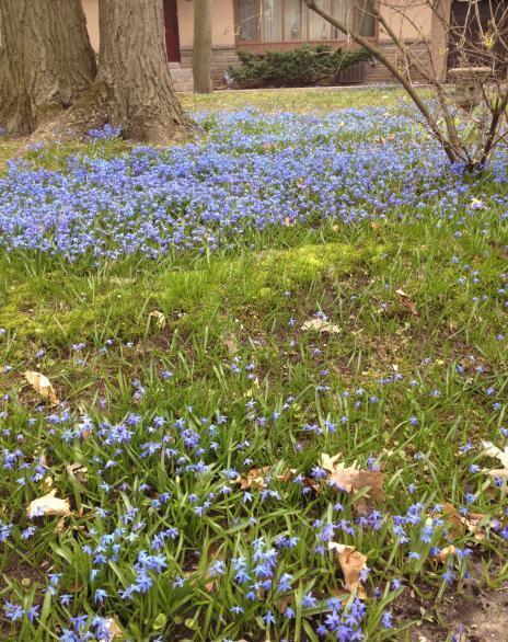 ブルーの絨毯