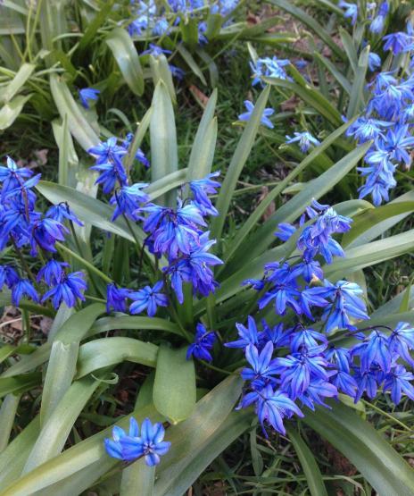 ブルー花。縦
