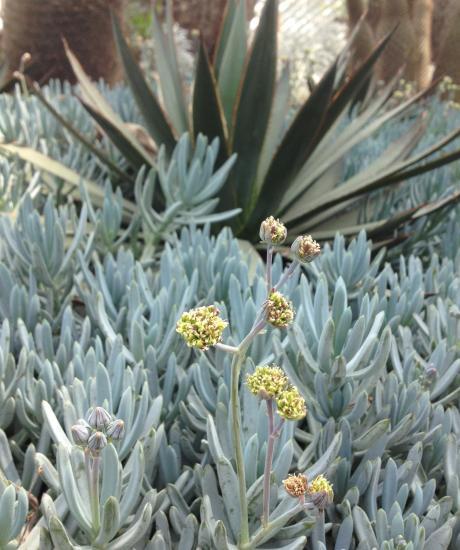 サボテンと花