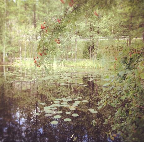 モネの絵のような湖
