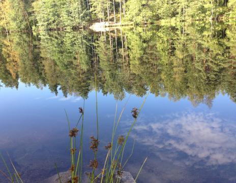 湖と映り込む草
