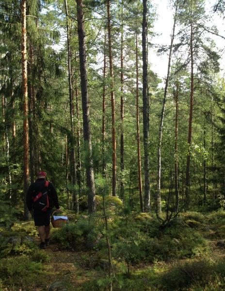 森の中Jari