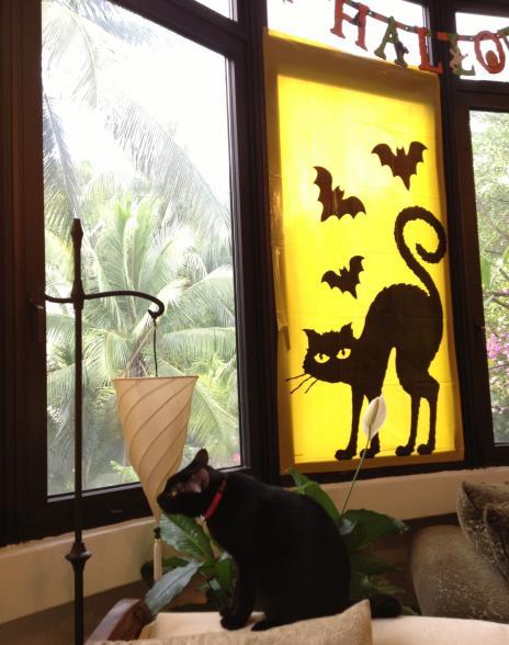 窓辺のポメチャ