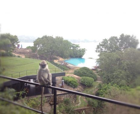 お猿さん、プール