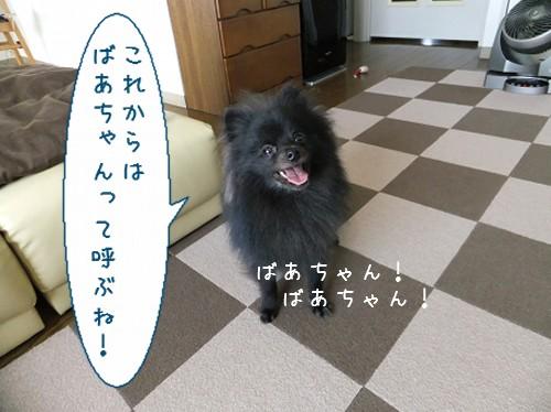 20120514_5.jpg