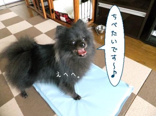 20120516_6.jpg