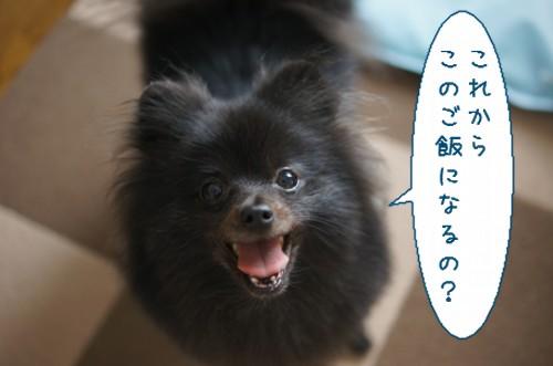 20120614_7.jpg