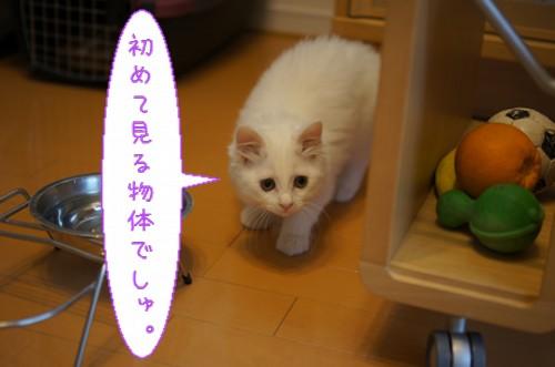 20120619_3.jpg