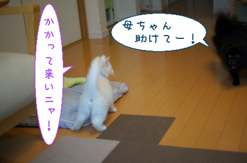20120619_5.jpg