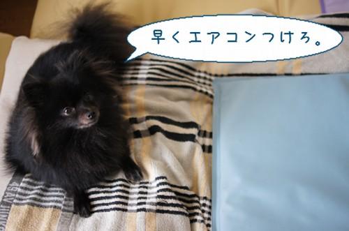 20120718_1.jpg