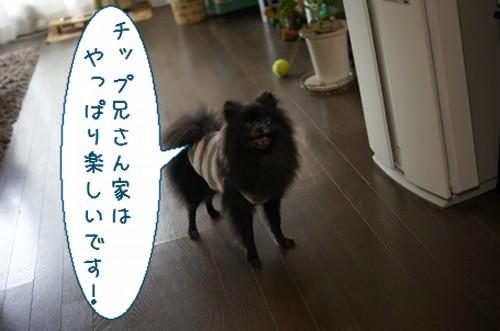 20120724_9.jpg