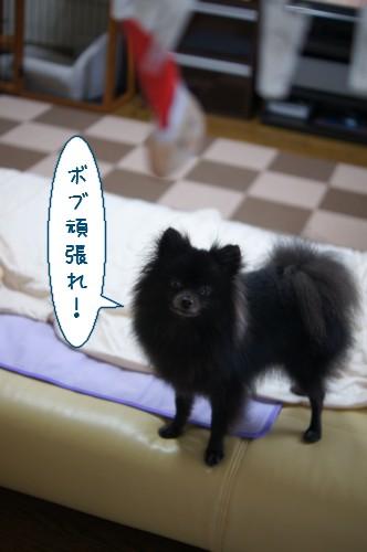 20120727_10.jpg