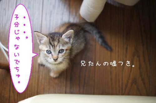 20120829_2.jpg