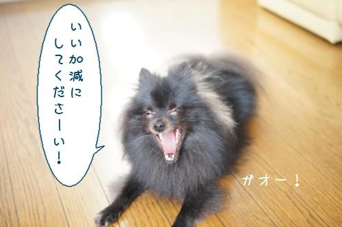 20120910_6.jpg
