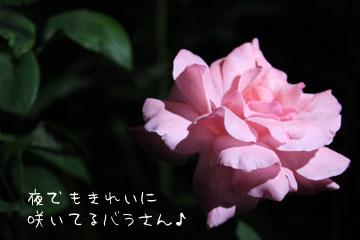 IMG_1599.jpg